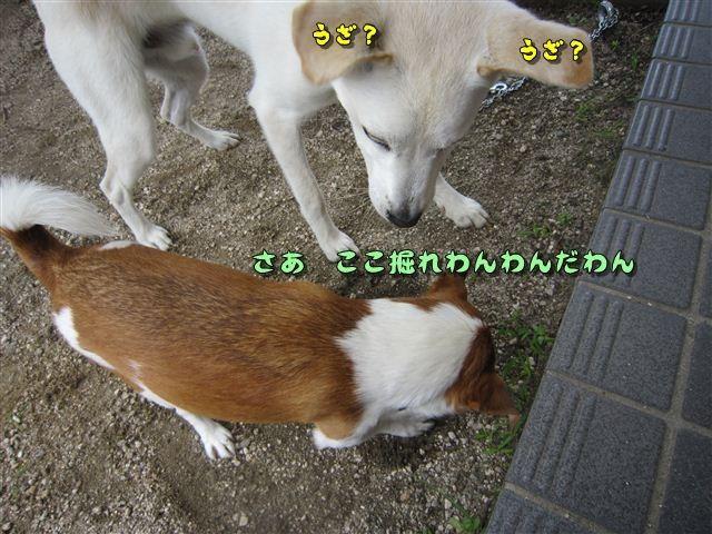 f:id:yasukazu01:20120719122936j:image