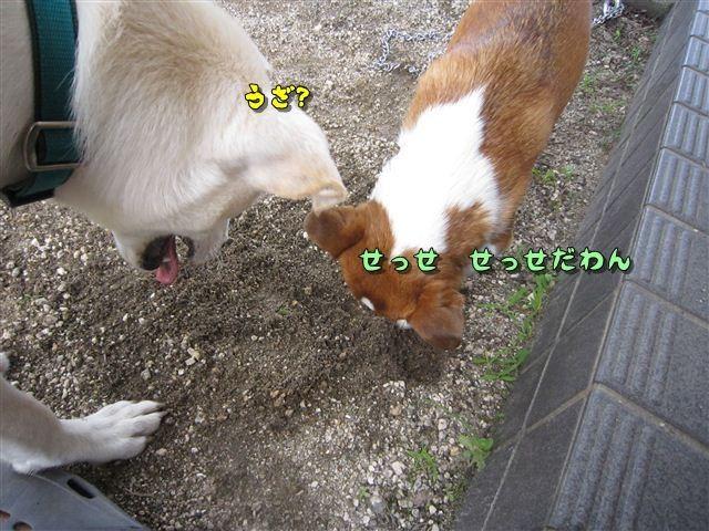 f:id:yasukazu01:20120719123030j:image