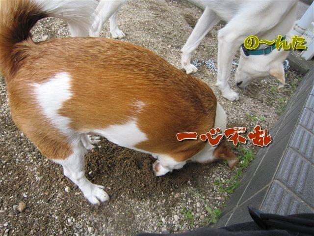 f:id:yasukazu01:20120719123108j:image