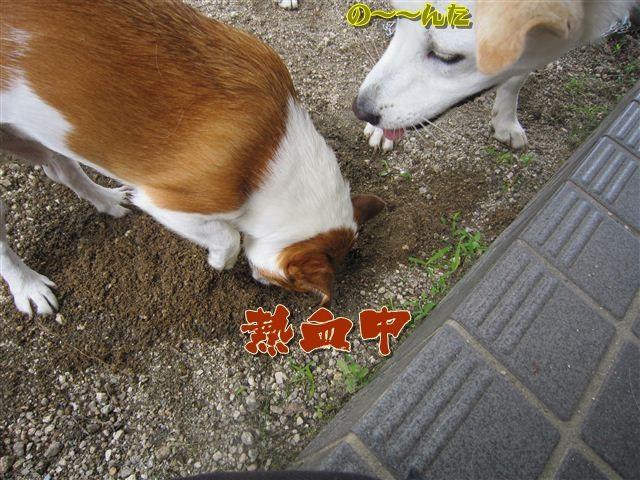 f:id:yasukazu01:20120719123115j:image