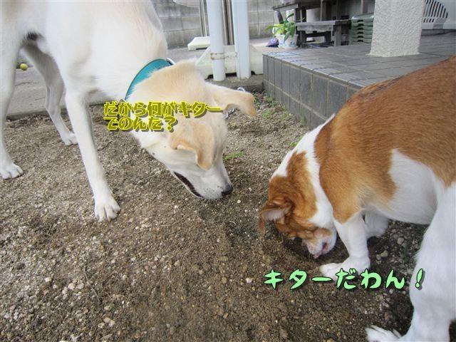 f:id:yasukazu01:20120719123154j:image