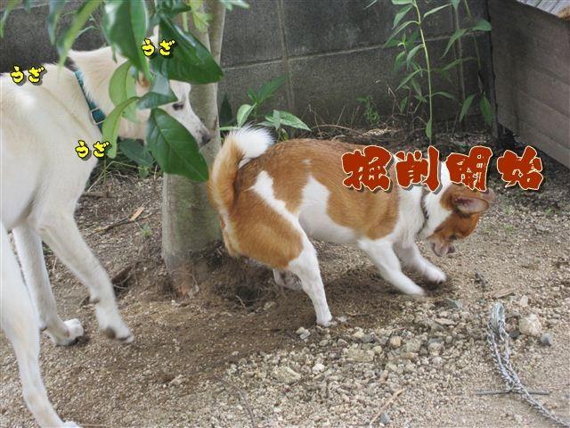 f:id:yasukazu01:20120719153731j:image