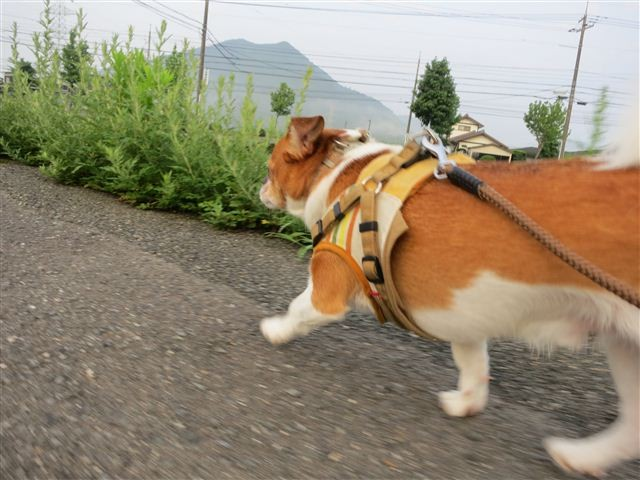 f:id:yasukazu01:20120723060439j:image