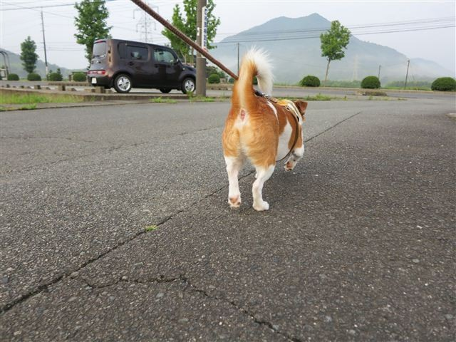 f:id:yasukazu01:20120723060524j:image