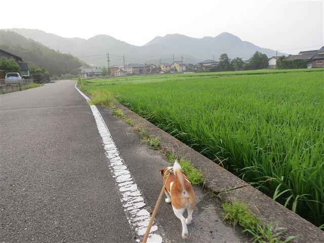f:id:yasukazu01:20120723060631j:image