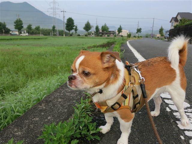 f:id:yasukazu01:20120723060935j:image