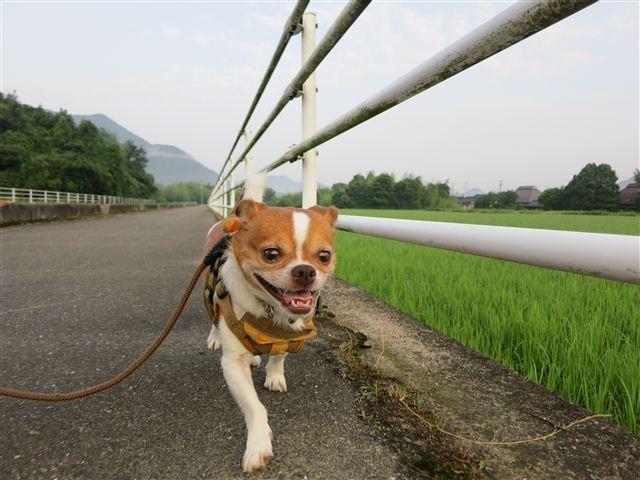 f:id:yasukazu01:20120723062210j:image