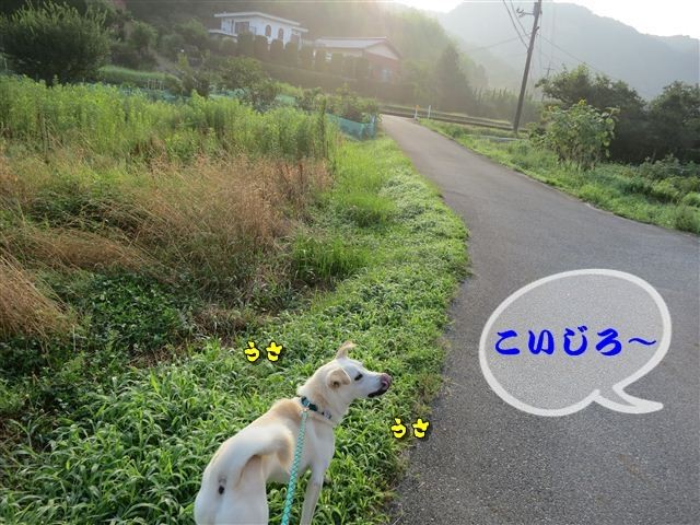 f:id:yasukazu01:20120723065123j:image