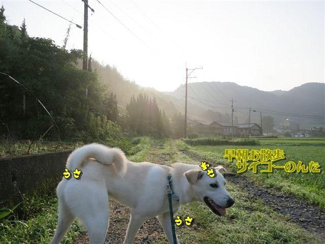 f:id:yasukazu01:20120723065315j:image