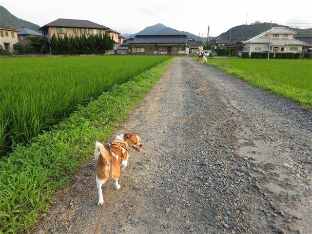 f:id:yasukazu01:20120723182718j:image