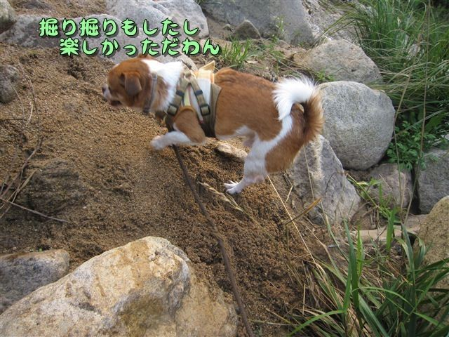 f:id:yasukazu01:20120727182345j:image