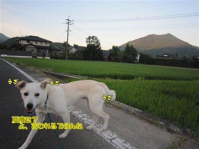 f:id:yasukazu01:20120729054248j:image