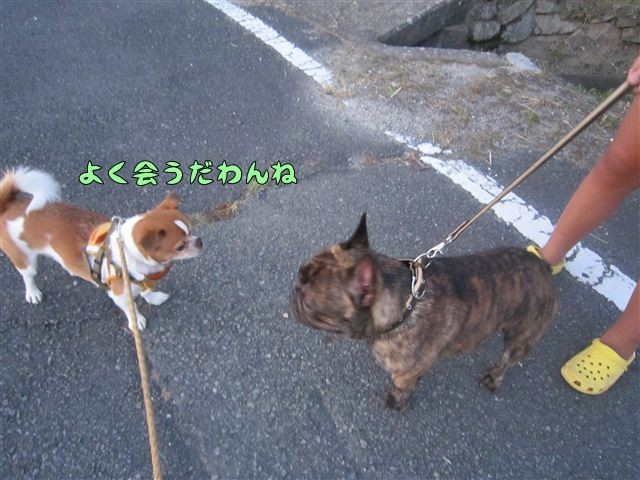 f:id:yasukazu01:20120730192435j:image