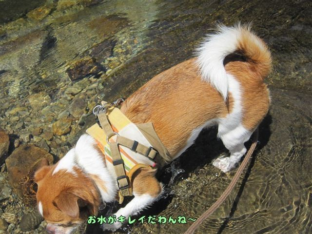 f:id:yasukazu01:20120731110925j:image