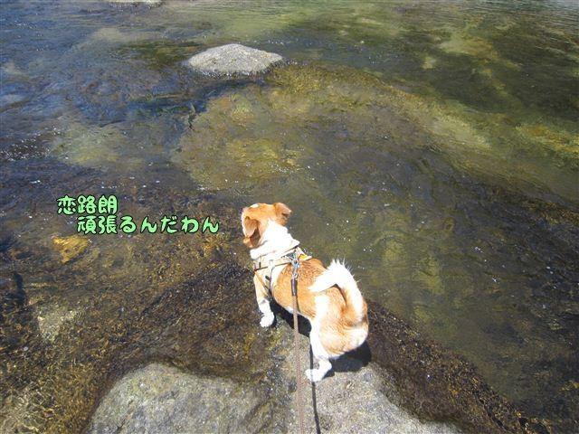 f:id:yasukazu01:20120731111839j:image