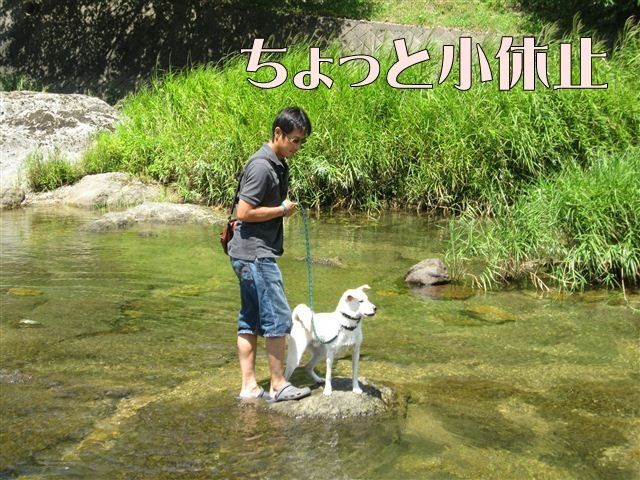 f:id:yasukazu01:20120731112204j:image