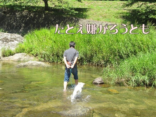 f:id:yasukazu01:20120731112240j:image