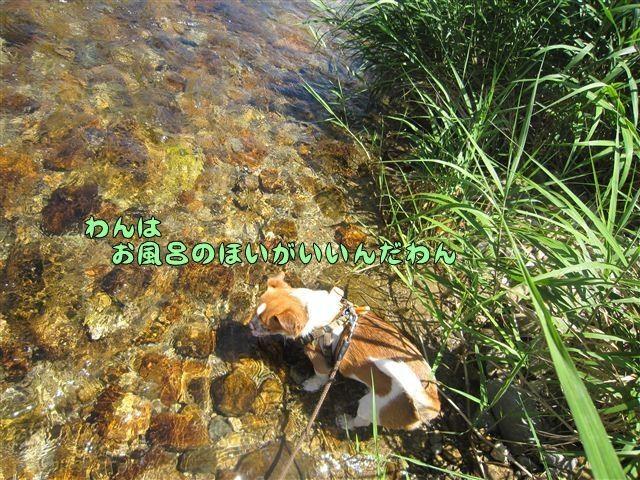 f:id:yasukazu01:20120731112937j:image