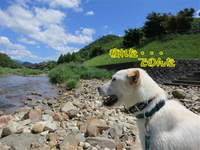 f:id:yasukazu01:20120731112943j:image