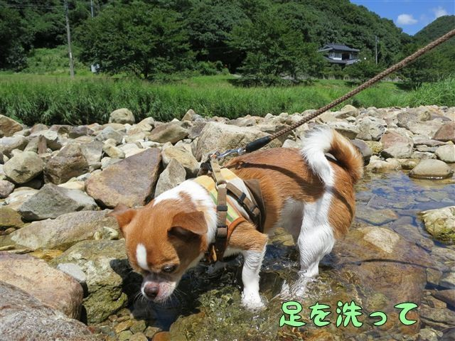 f:id:yasukazu01:20120731113357j:image