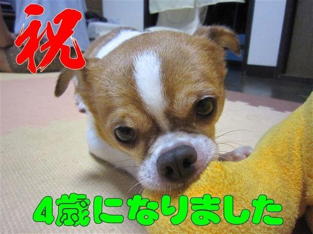 f:id:yasukazu01:20120731220313j:image