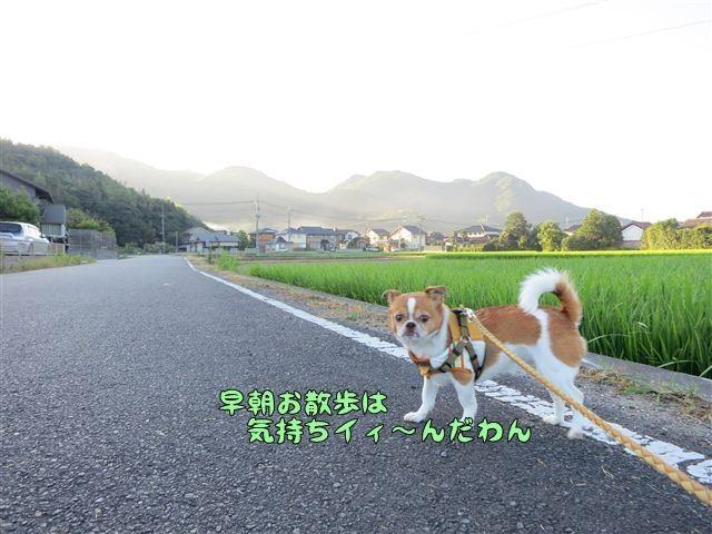 f:id:yasukazu01:20120803064033j:image