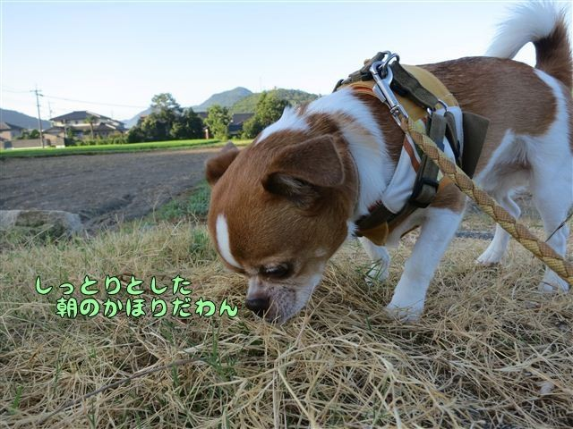 f:id:yasukazu01:20120803064359j:image