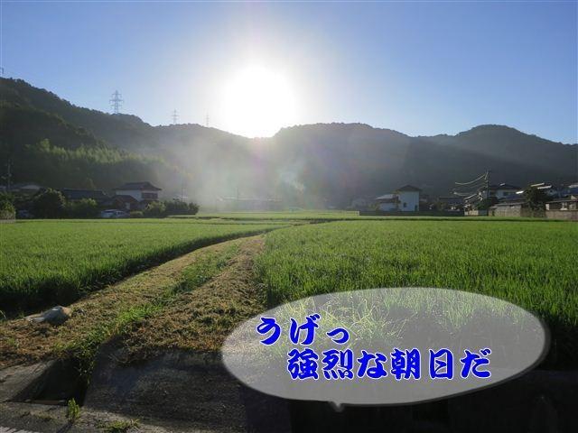 f:id:yasukazu01:20120803064730j:image