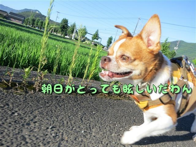 f:id:yasukazu01:20120803065503j:image