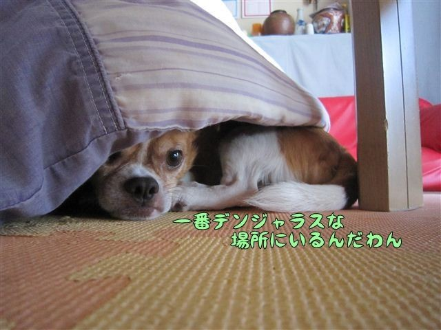 f:id:yasukazu01:20120803170720j:image