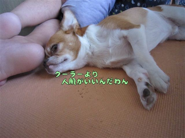 f:id:yasukazu01:20120803171609j:image