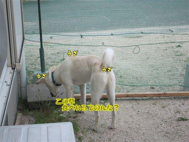 f:id:yasukazu01:20120805181418j:image