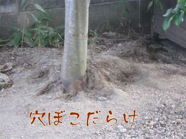 f:id:yasukazu01:20120805181544j:image
