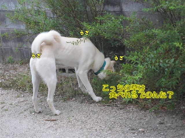 f:id:yasukazu01:20120805181554j:image