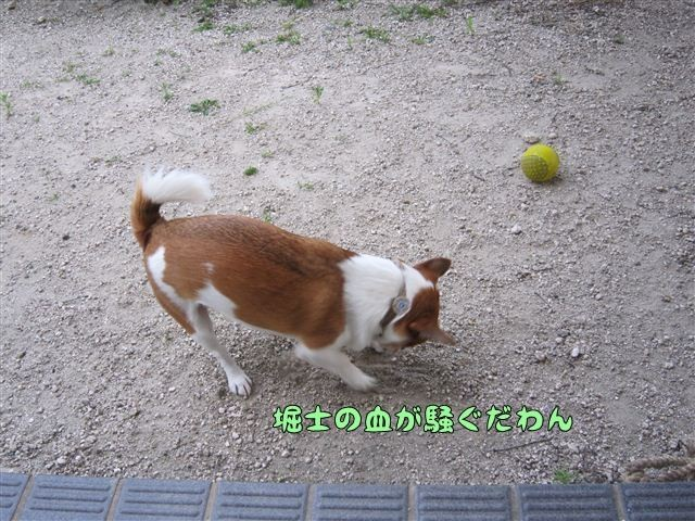 f:id:yasukazu01:20120805184927j:image
