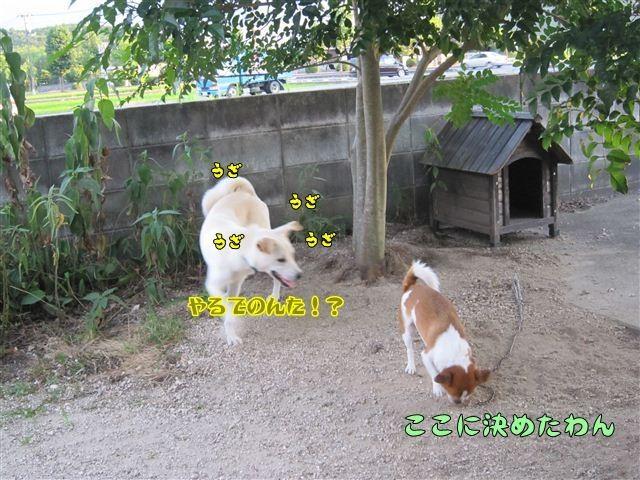 f:id:yasukazu01:20120805185130j:image