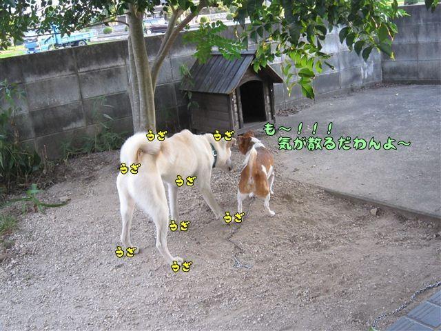 f:id:yasukazu01:20120805185144j:image
