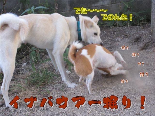 f:id:yasukazu01:20120805185308j:image