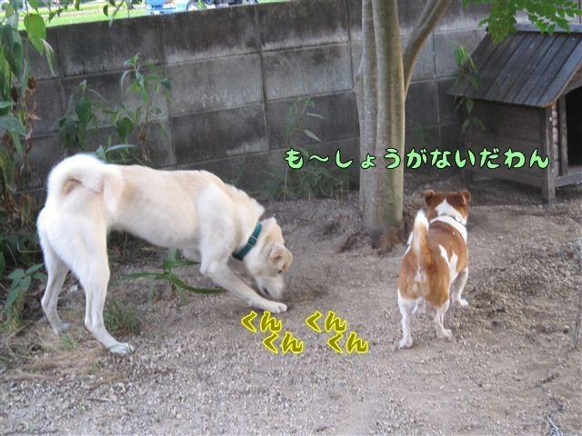 f:id:yasukazu01:20120805185410j:image
