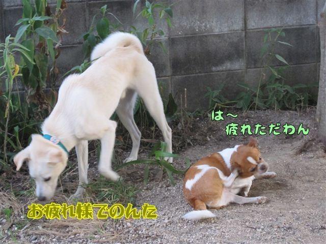 f:id:yasukazu01:20120805185438j:image