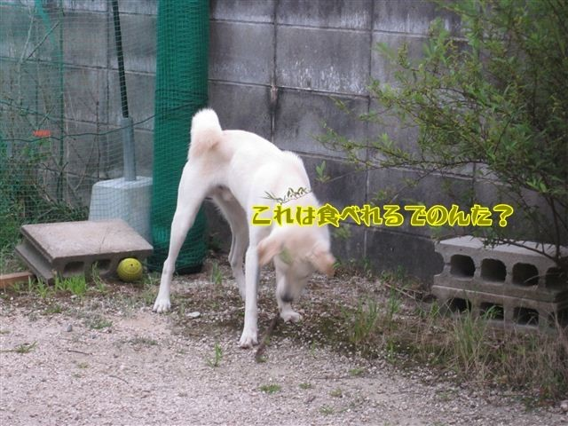 f:id:yasukazu01:20120805190354j:image