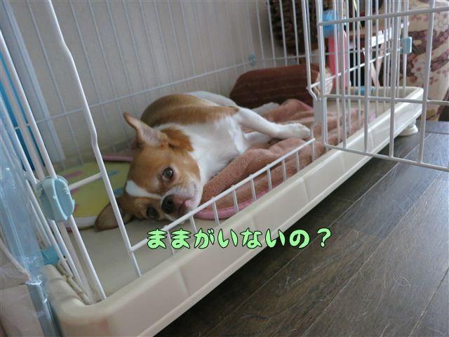 f:id:yasukazu01:20120807092417j:image