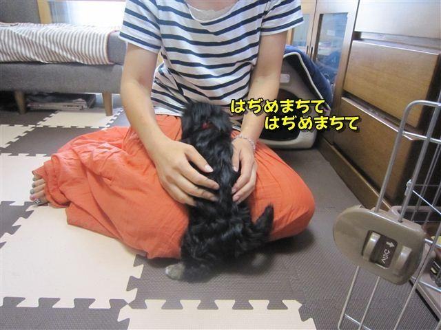 f:id:yasukazu01:20120815100527j:image