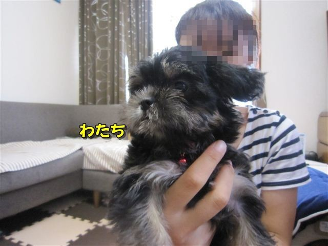 f:id:yasukazu01:20120815100607j:image