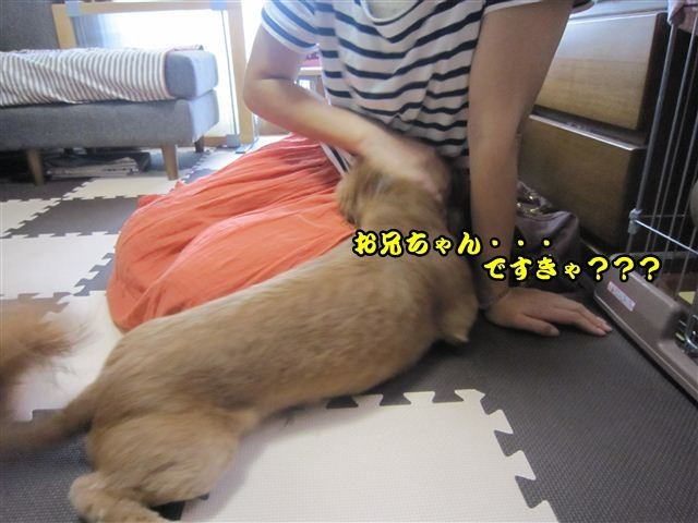 f:id:yasukazu01:20120815103302j:image