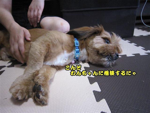 f:id:yasukazu01:20120815103705j:image