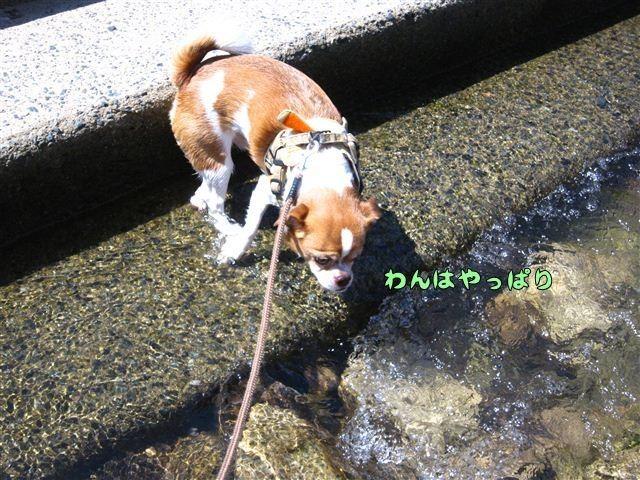 f:id:yasukazu01:20120816102850j:image