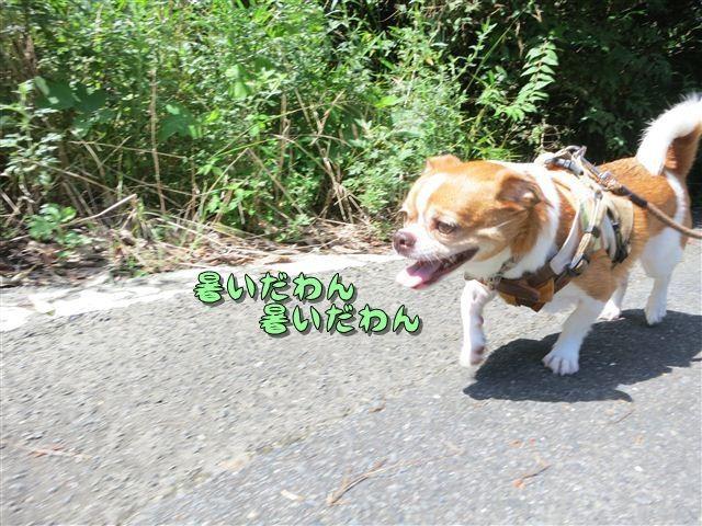 f:id:yasukazu01:20120816103235j:image