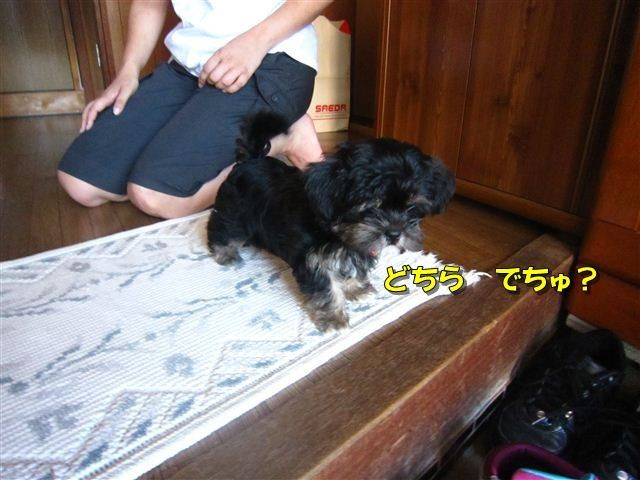f:id:yasukazu01:20120816163646j:image