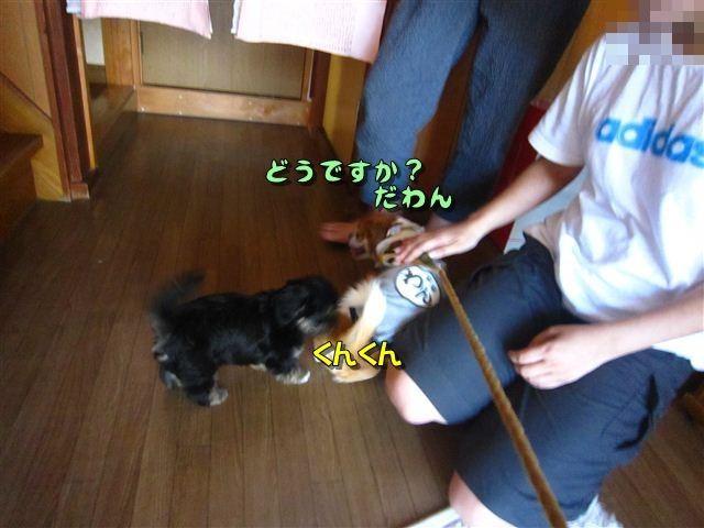 f:id:yasukazu01:20120816163720j:image